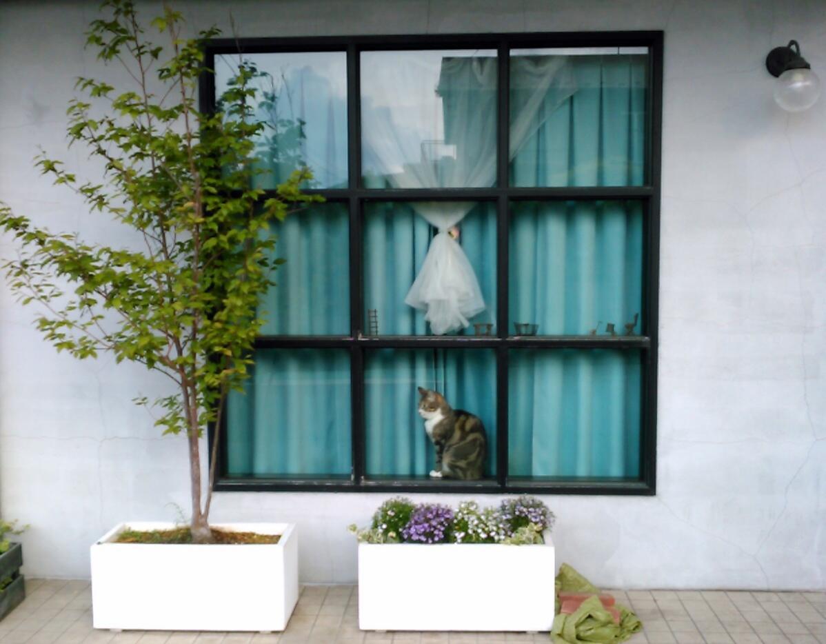 窓の猫さん