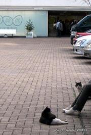 1-atagoyama_cat1.jpg