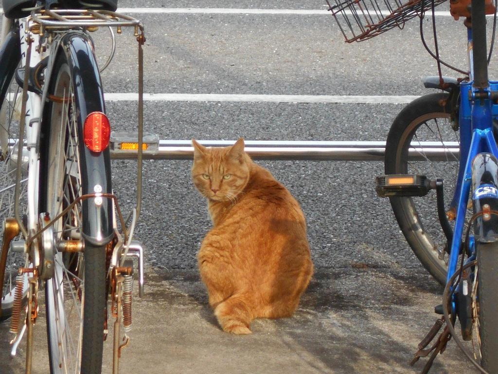 習志野の猫写真帖から(2021/2/12)